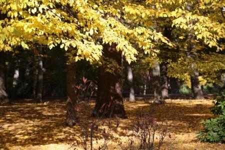 Jesień w parku Szczytnickim we Wrocławiu /fot.  CHIDUSZ 2015