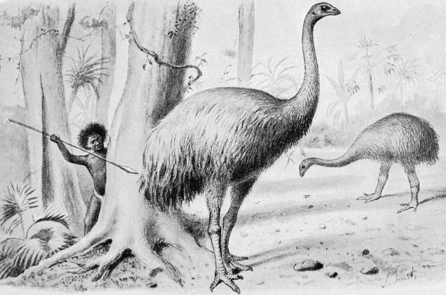 Maorysi polujący na ptaki/ Wikipedia
